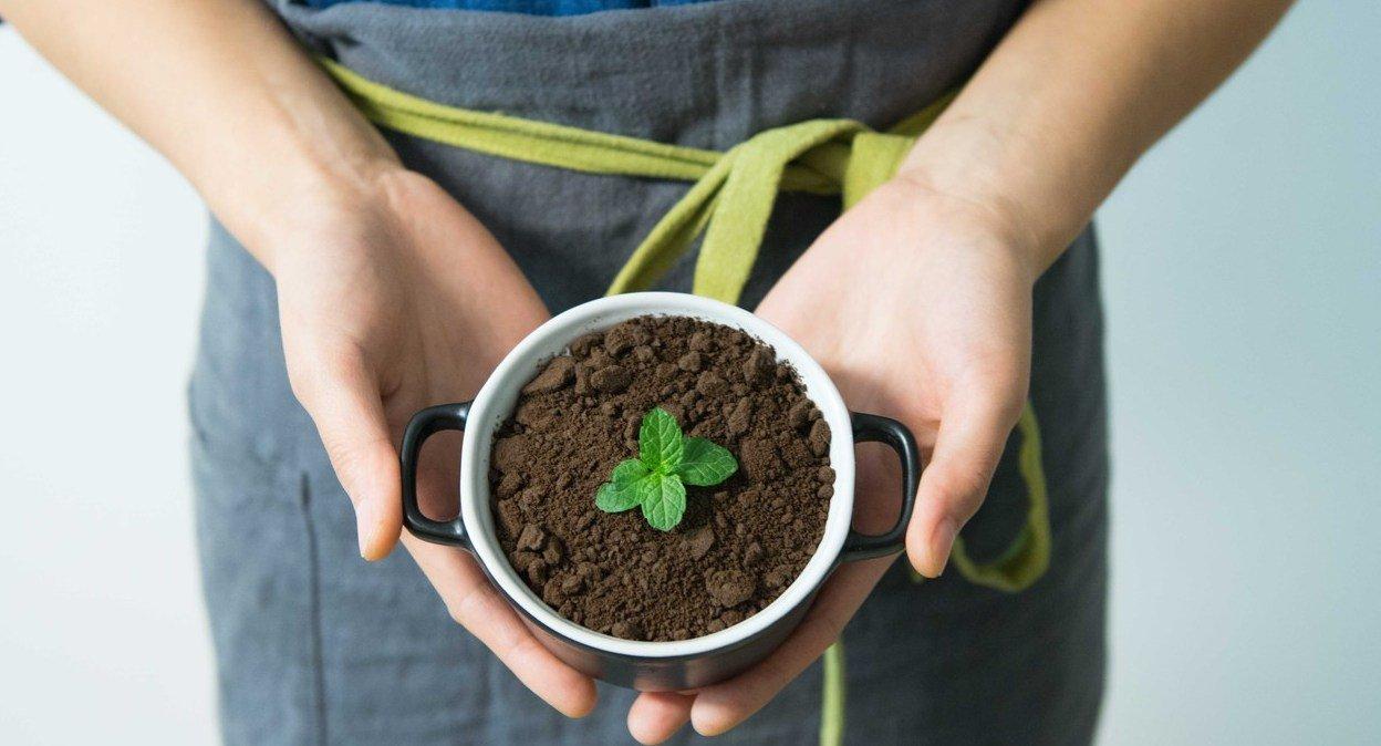 Kopje met aarde en plantje die eruit groeit