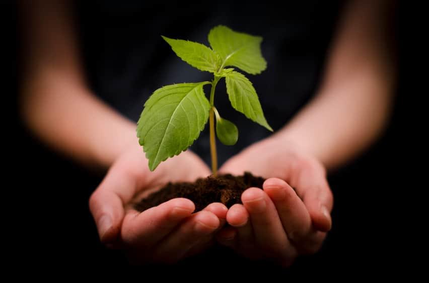 Plantje in handen