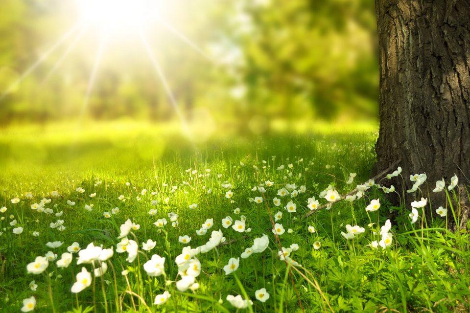 natuur gras bloemen hooikoorts
